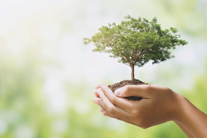 エクステリアの最後の仕上げとして植栽をしてみませんか?